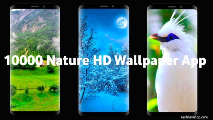 10000 Nature HD Wallpaper